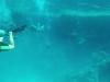 ZeeZwembadGroep 14